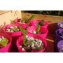 Suculentas Y Cactus! Imperdibles