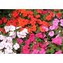 Alegrias Del Hogar! Para Su Jardin, Hermosa Planta