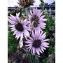 Las Mejores Flores Para Tu Jardín O Terraza: Valor De C/u