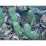Cactus,carnosas Y Varias Mas Y Tambien Macetas