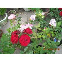 Rosales De Rio Negro Rosauer