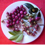 Cereza Magenta=cereza Australiana=lilly Pilly Planta Exotica