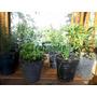 10 Plantas Aromaticas Y Especias A Elección Raizmadre