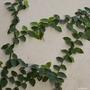 Enamorada Del Muro X 3 Unidades Jardinyparque