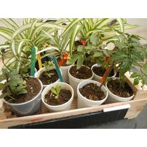 Cajoncito 12 Plantas, Pizarra Y Tutores.