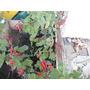 Salvia De Jardin Atrae Colibri Cajon X 10