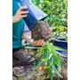 Agapantos, Agapanthus, Plantas Para Canteros, Flores