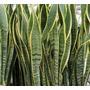 Plantas Interior-exterior +maceta Prisma Fibrocemento+tierra