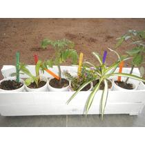 Cajoncito C/6 Plantines Y Señaladores. Flores, Aromáticas...