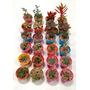 Suculentas Y Cactus, Pack De 10