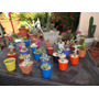 Mini Cactus Y Suculentas Ideal Para Souvenirs !!!