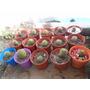 Cactus Varios: Echinopsis, Mammilarias, Etc
