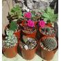 Set De 5 Cactus Y Suculentas En Macetas N° 6