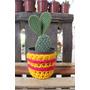 Cactus Y Suculentas En Maceta Tejida