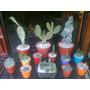 Cactus Suculentas Plantas Terrario Flores Macetas Souvenir