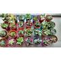 Plantas Suculentas En Macetas Plasticas Num 6