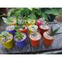 Caja De Cactus/suculentas X 10 Unidades En Maceta N6