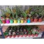Cactus Y Suculentas Souvenirs Regalos. Mac.6, 9 Mismo Precio