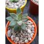 Cactus Suculentas X10 Unidades Maceta N6