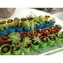 Mini Cactus Con Maceta Plástica!