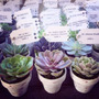 Souvenirs Minimacetas Con Suculentas/cactus Cumple Boda