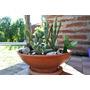 Cactus Suculentas En Maceta Paisajes
