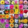 107 Variedades Semillas De Flores En Sobres 100% Germinacion