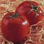Tomate Santa Cruz Gigante Huerta Semillas Para Plantas