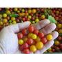 Tomate Liliput, El Menor Del Mundo!! Semillas Para Plantas