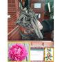 Bulbo Madre Peonia Gigante Sin Dividir Rosa Bulbos-semillas