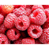 Rapsberry Frambuesa Gigante Rubus Idaeus Semillas P/plantas