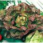 Lechuga Maravilla Cuatro Estaciones Lactuca Sativa Semillas