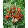 Tomate Cherry De Colgar Yubi Semillas Para Plantas