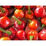 Pimienta De Cabrito Roja Capsicum Chili Semillas P/ Plantas