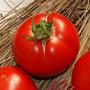 Tomate Frances Saint Pierre Semillas Para Plantas