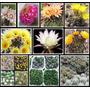 Kit De Cultivo Mix Combo 70 Semillas De Cactus Suculentas