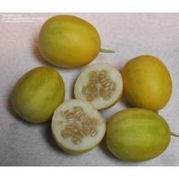 Vine Peach - Durazno De Enredadera Semillas Para Plantas