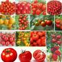 Combo Tomate Raros 12 Variedades - 200 Semillas Para Cultivo