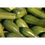 Semillas Orgánicas De Zapallo Zucchini
