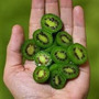 Semillas Kiwi Baby Para Gourmet Únicos En Argentina!!!!!!!