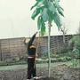 Col Gallega - Palmera Al Instante Semillas Para Plantas