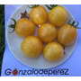 25 Semillas De Cherry Zebra Amarillo