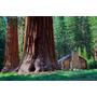 Semillas De Sequoia - Arbol Mas Alto Del Mundo