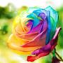Semillas De Rosa Arcoiris, Exotica Varios Colores
