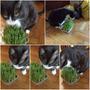 Hierba Para Gatos Semillas Para Plantas