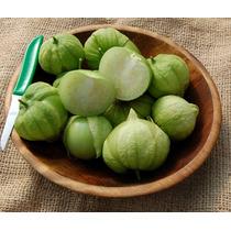 Tomatilo Toma Verde Physalis Ixocarpa Semillas Para Plantas