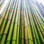 Cañas De Bambu Tacuara Decoracion Paq 10u X 2 Mts Barnizada