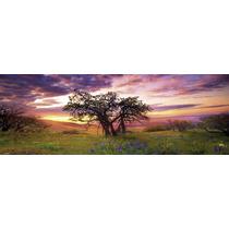 Rompecabezas Heye 2000 Piezas Panoramico: Roble, Oak Tree