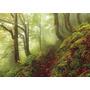 Rompecabezas Heye De 1000 Piezas: Magic Forests: Path