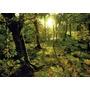 Rompecabezas Heye De 1000 Piezas: Magic Forests: Glade
